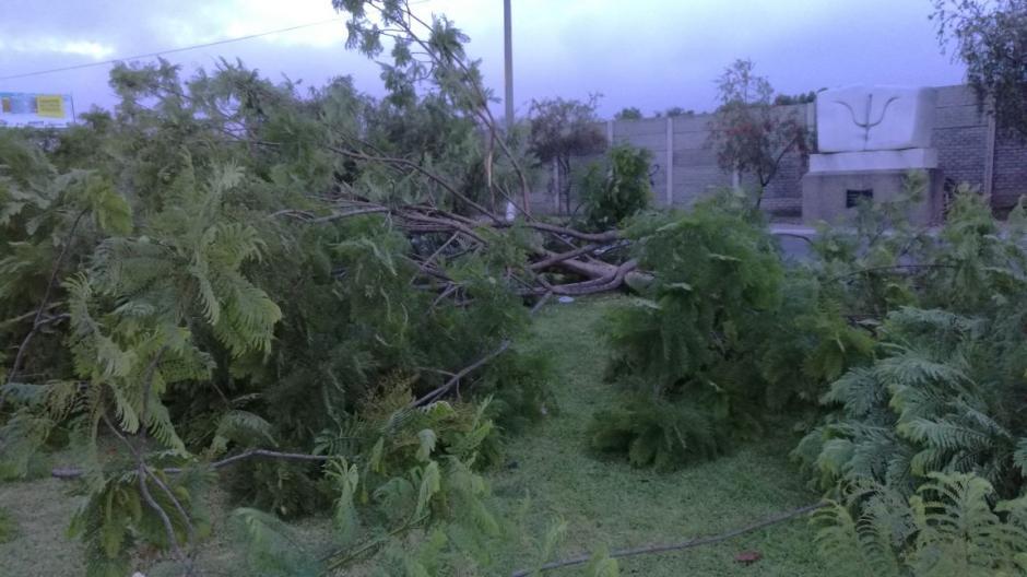 Algunas ramas obstaculizan el paso en el sector. (Foto: Municipalidad de Guatemala)