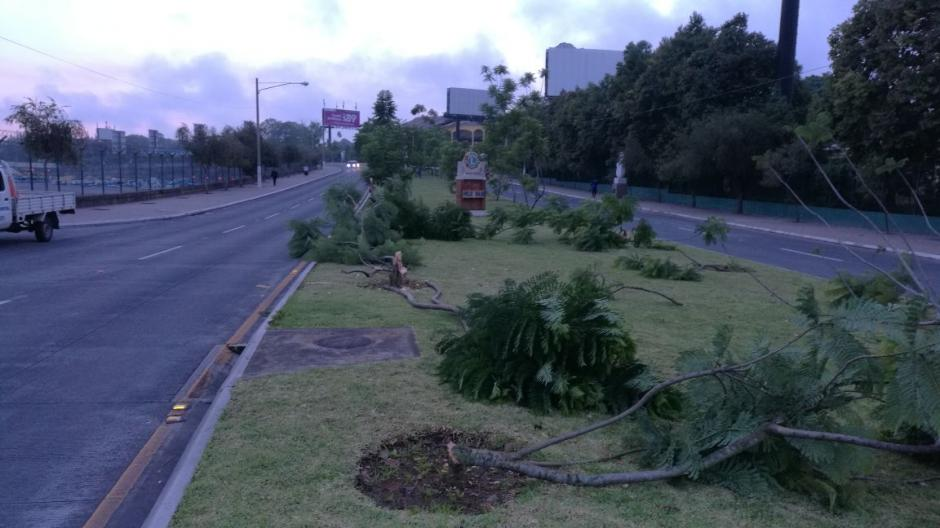 El paso en el bulevar Juan Pablo II es complicado debido a las ramas que obstruyen el paso. (Foto: Municipalidad de Guatemala)