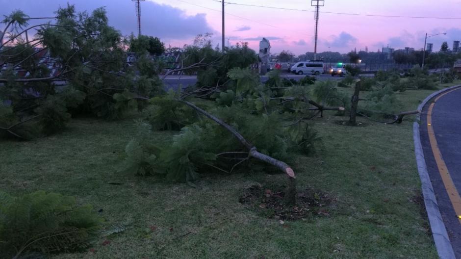Al menos 48 árboles fueron talados en el arriate central de ese bulevar. (Foto: Municipalidad de Guatemala)