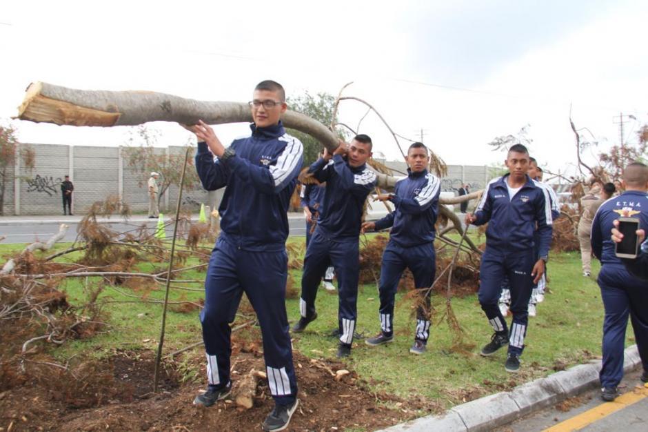 Los restos de los árboles talados fueron retirados. (Foto: Jesús Alfonso/Soy502)