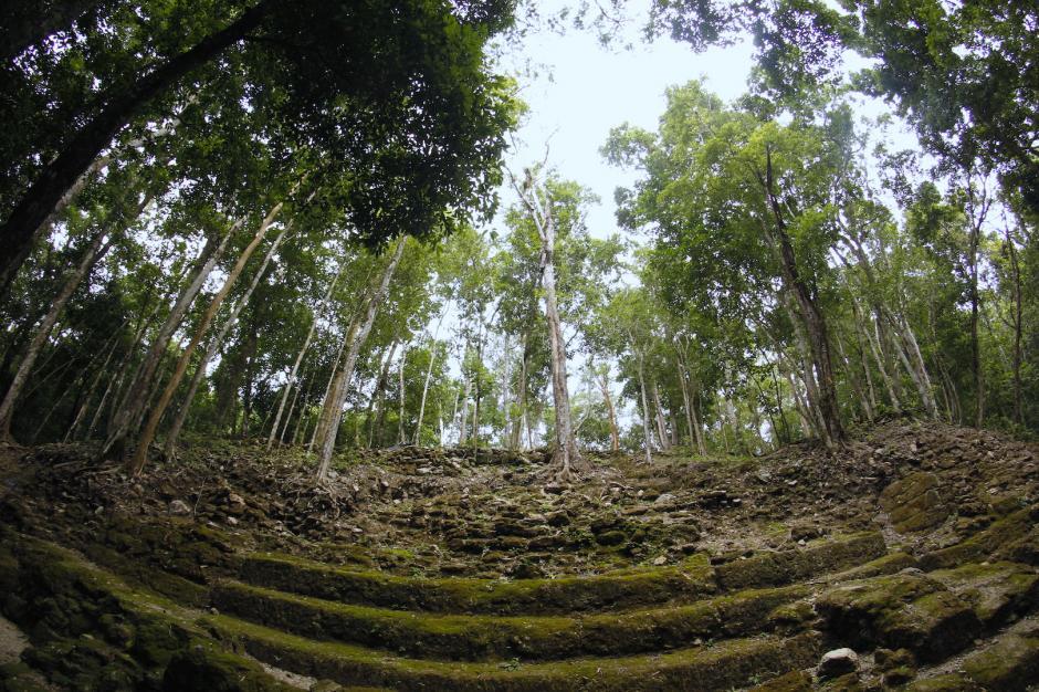 Varias estructuras siguen debajo de los árboles que han crecido en la selva. (Foto: Fredy Hernández/Soy502)