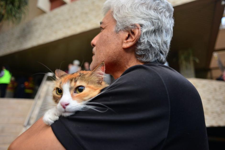 Una gatita llamada Monina Aycinena fue rescatada de un incendio. (Foto: Jesús Alfonso/Soy502)