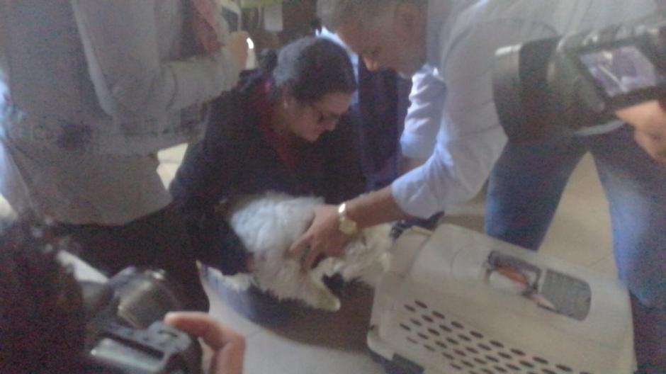Tres perros fueron rescatados del incendio ocurrido en un edificio de apartamentos. (Foto: Cruz Roja Guatemalteca)