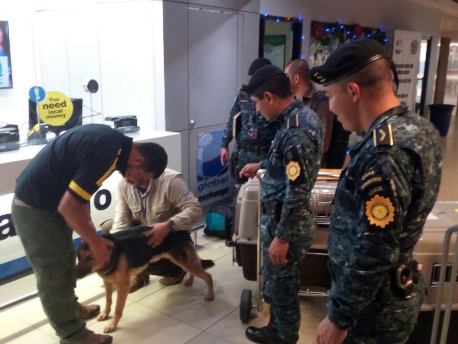 EE.UU. dona tres perros para que sean entrenados para ser agentes caninos. (Foto: PNC)
