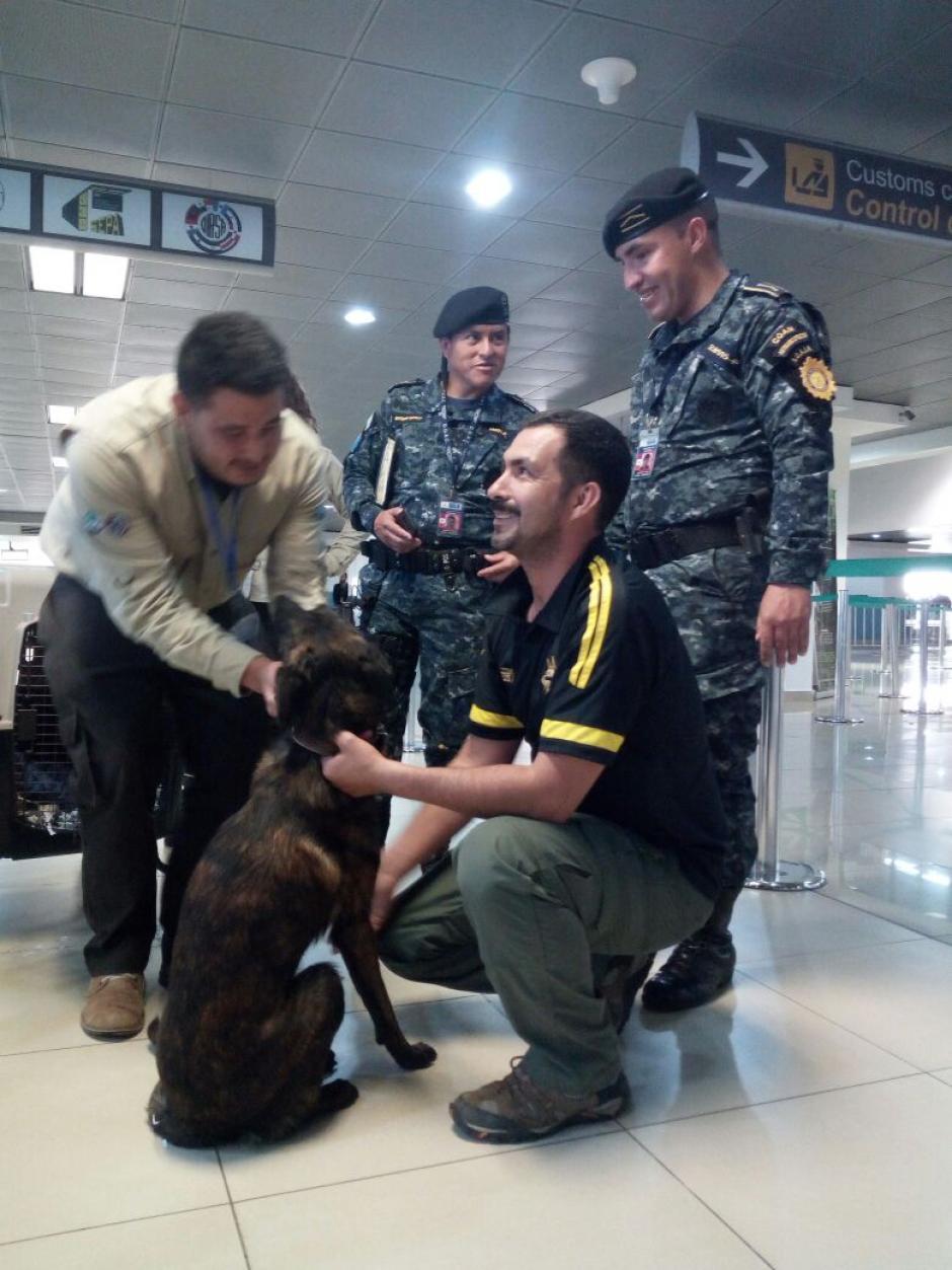 Los perros permanecerán en la Escuela Centroamericana de Entrenamiento Canino. (Foto: PNC)
