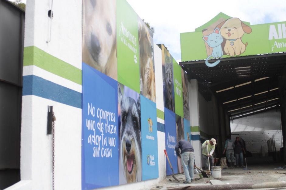 El albergue también pide el apoyo de voluntarios para cuidar de las mascotas. (Foto: Municipalidad de Mixco)