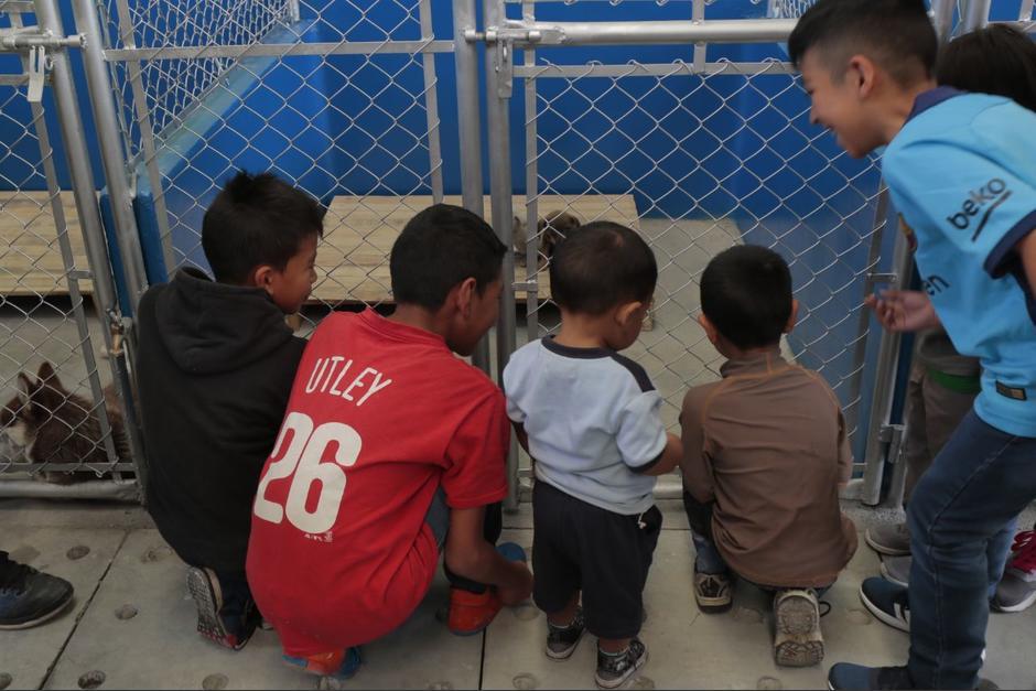 Varios niños observan a los perros que se mantienen en el lugar. (Foto: Alejandro Balan/Soy502)