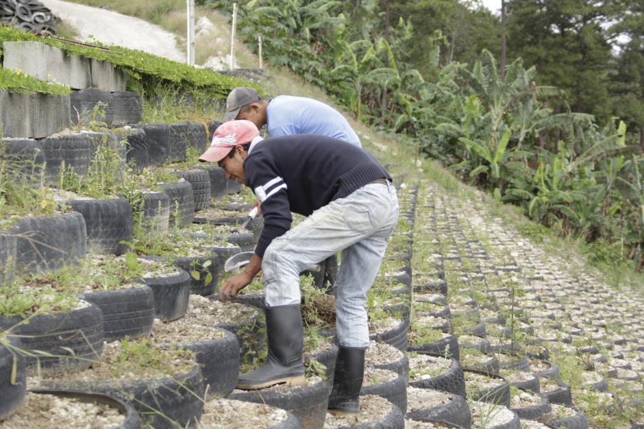 El espacio también funciona para la siembra de frijol. (Foto: Fredy Hernández/Soy502)