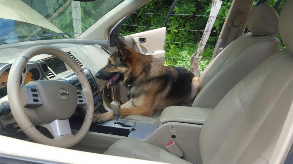 """En el cumplimiento de su deber murió """"Back"""" el agente canino de la PNC. (Foto: PNC)"""