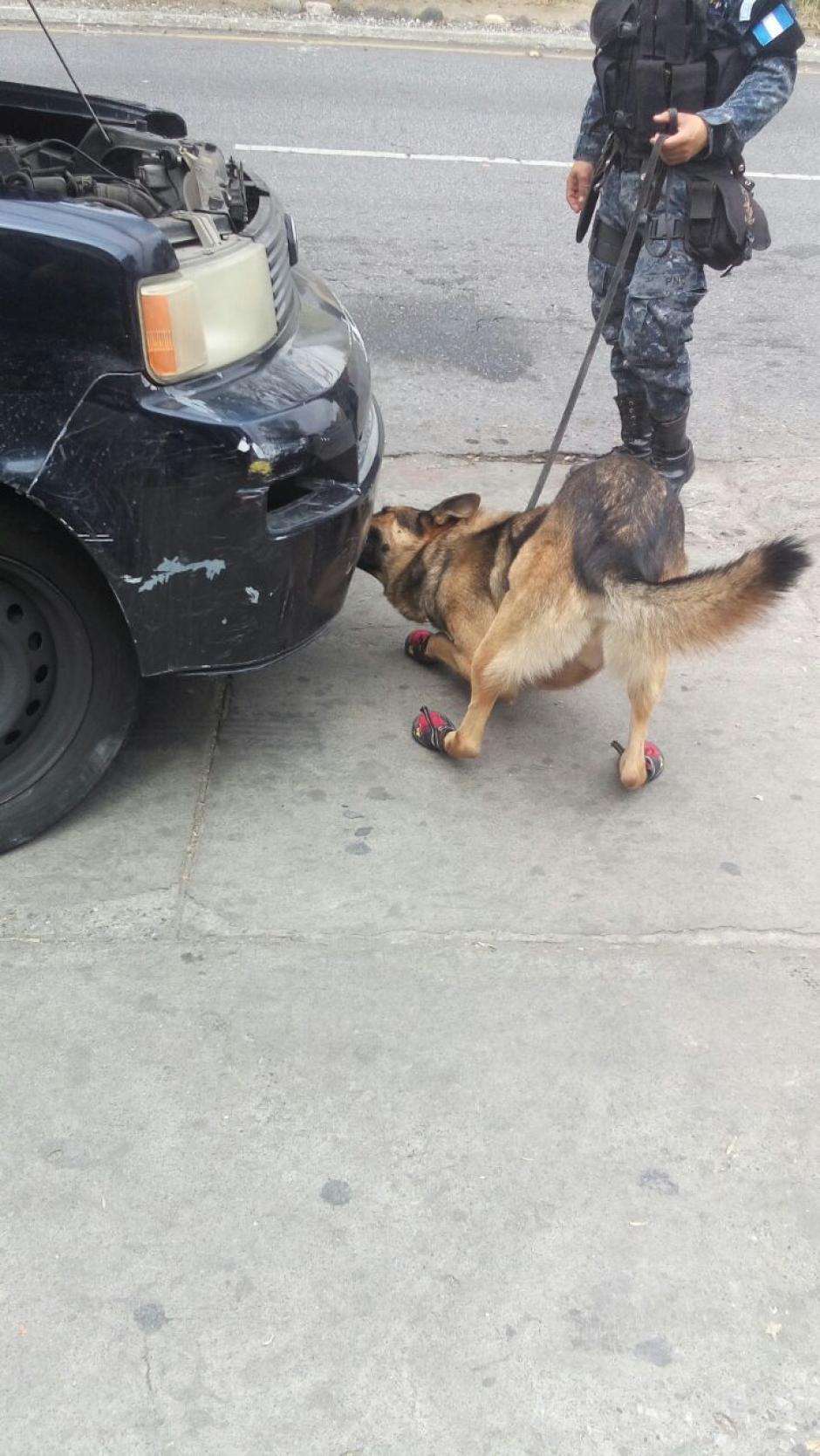 El agente canino murió a los cuatro años de vida.  (Foto: PNC)