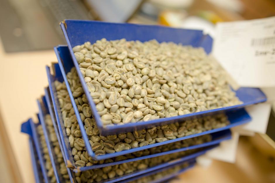 El café pergamino es recibido en Anacafé para su control de calidad. (Foto: George Rojas/soy502)