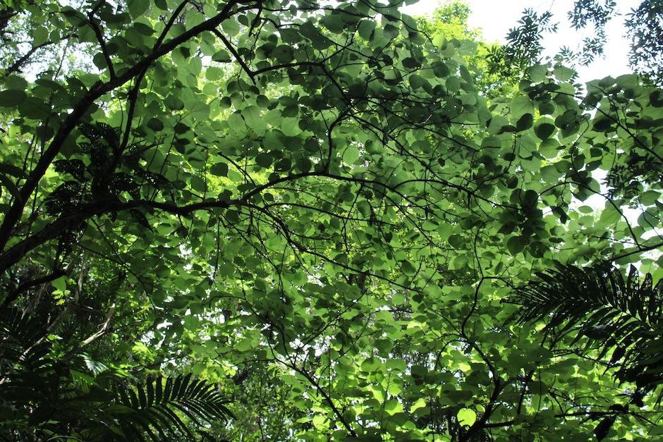 """""""Jungla Urbana"""" está cubierto con un verdadero manto verde. (Foto: Andrea Castillo/Soy502)"""