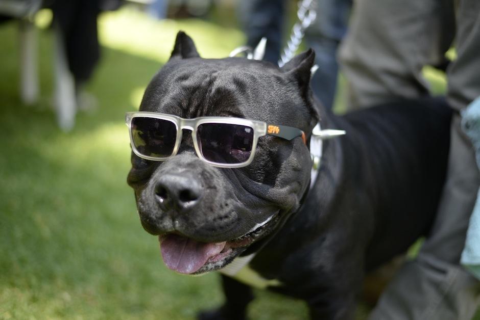 Cada can llegó con mucha actitud y personalidad. (Foto: Wilder López/Soy502)