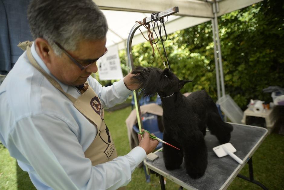 El grooming no puede falta para que los perritos luzcan espectaculares. (Foto: Wilder López/Soy502)