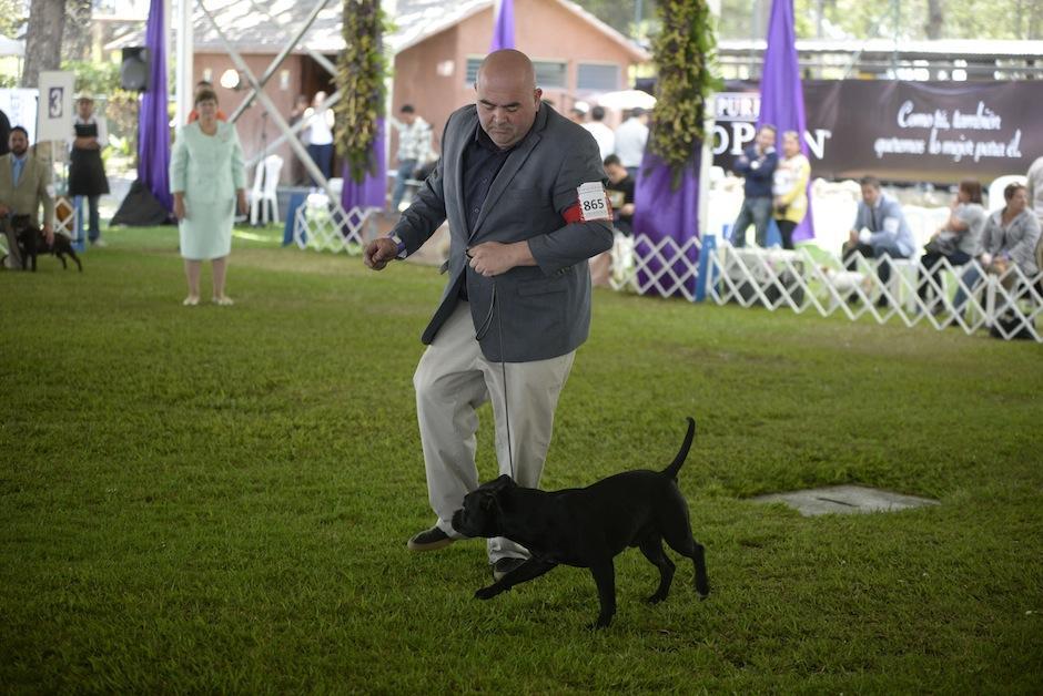 Cada perro se coordina con su acompañante humano. (Foto: Wilder López/Soy502)