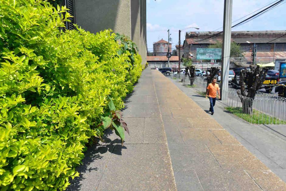 Además, solicitan que se cuiden los arriates en las banquetas que rodean el edificio. (Foto: Jesús Alfonso/Soy502)