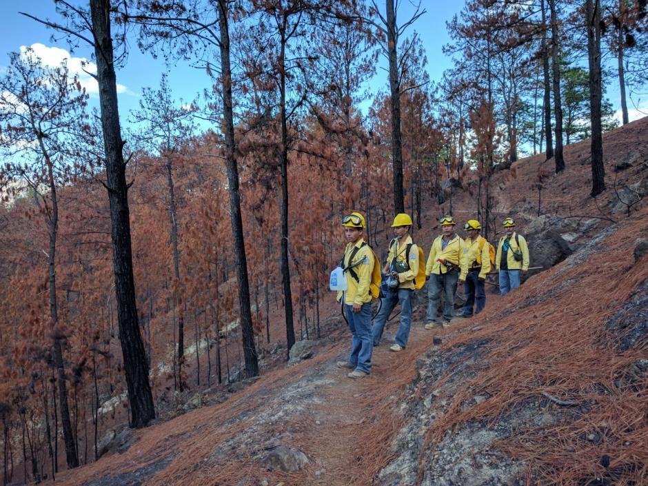 El Sipecif cuenta con 22 cuadrillas de bomberos forestales. (Foto: Cortesía César Hernández)
