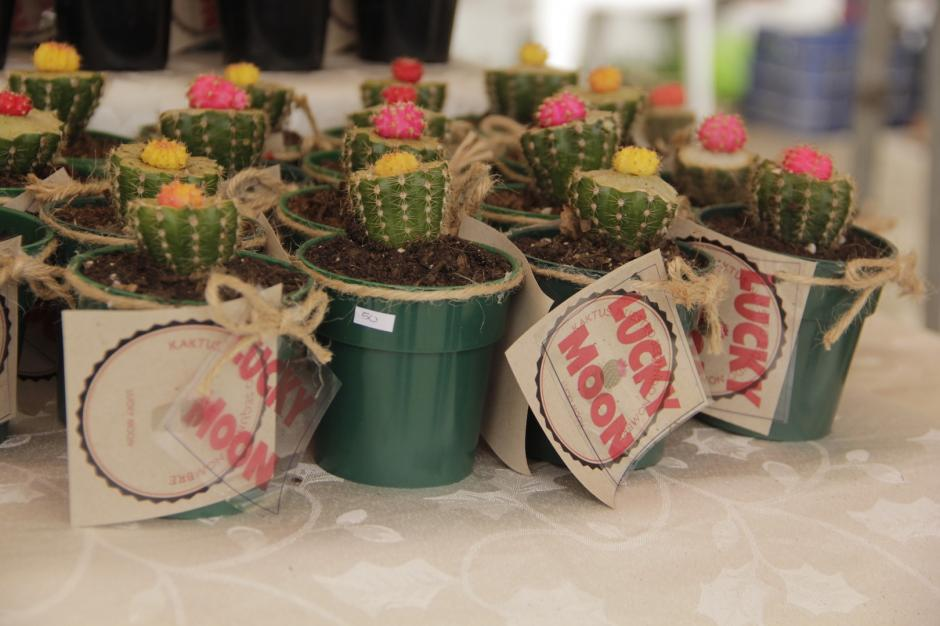 Los injertos en cactus se han ido como pan caliente por ser poco comunes. (Foto: Fredy Hernández/Soy502)