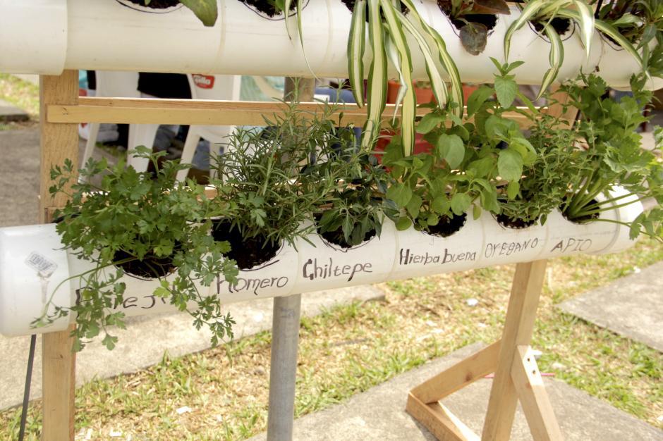 Un grupo de estudiantes te ofrece crear tu macetero aéreo y lo instalan en tu hogar. (Foto: Fredy Hernández/Soy502)