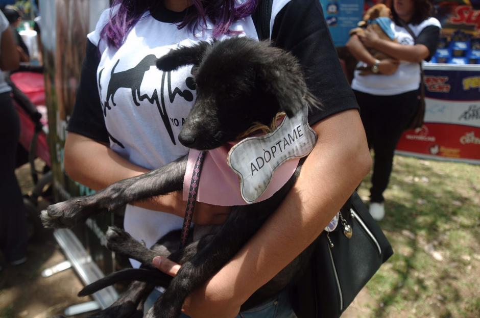 Desde que se creó la iniciativa se han adoptado más de 700 animales. (Foto: Jesús Alfonso/soy502)