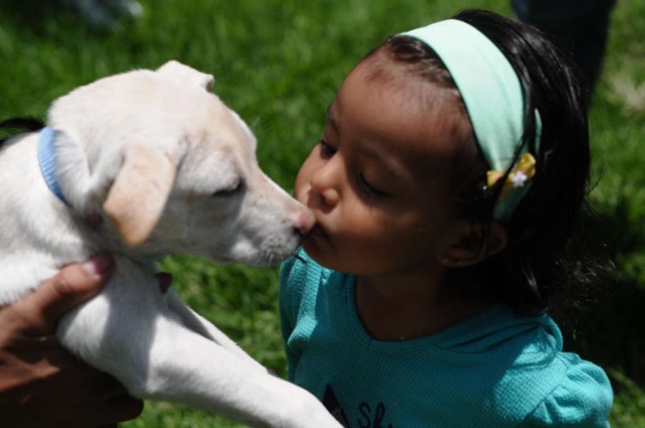 Pueden adoptarse en Pasos y Pedales hasta el 21 de mayo. (Foto: Jesús Alfonso/soy502)