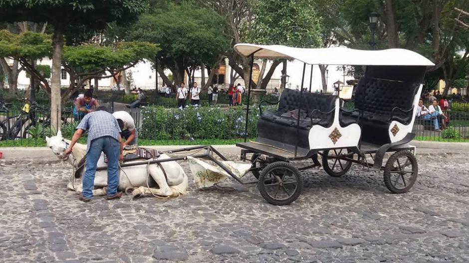 El jinete le quitó las riendas al caballo y se lo llevó del lugar. (Foto: Gala Noticias Sacatepéquez)