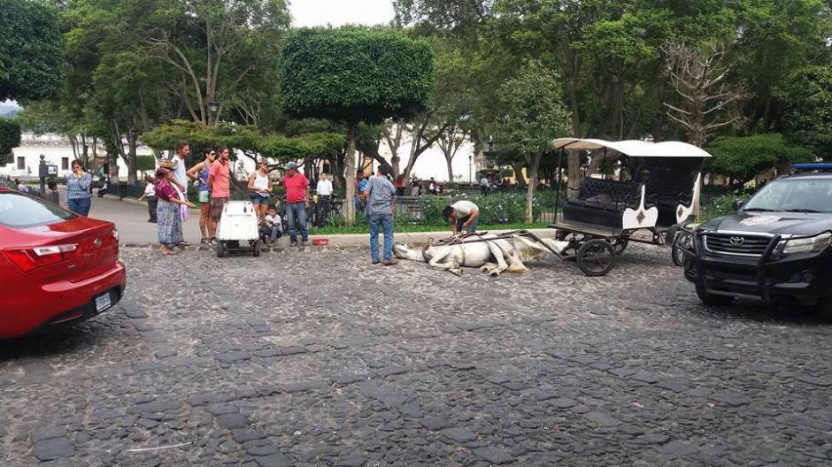 El acompañante del jinete explicó a los curiosos que el caballo sufre de cólicos. (Foto: Gala Noticias Sacatepéquez)