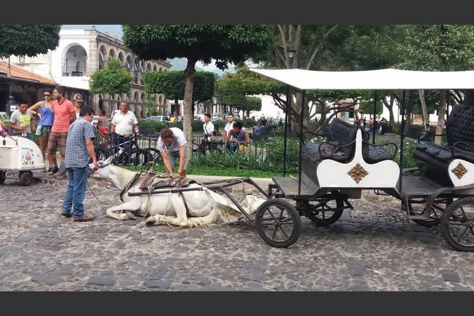 El caballo se rindió y quedó tendido a inmediaciones del Parque Central de Antigua. (Foto: archivo)
