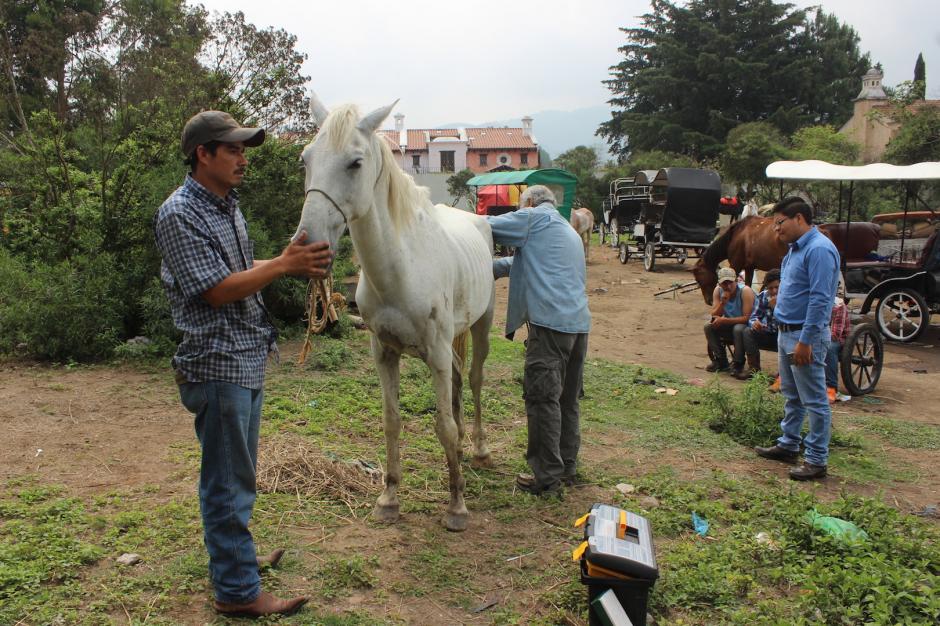 La fundación Equinos Sanos para el Pueblo buscó al caballo lastimado en Antigua. (Foto: ESAP)