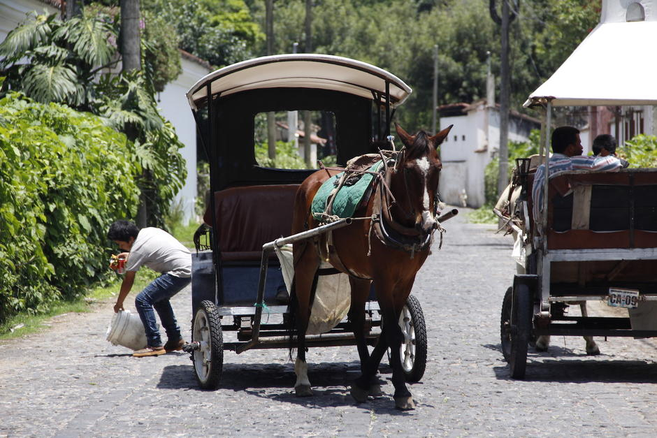 En Antigua existen cerca de 10 carruajes y 20 caballos que las halan. (Foto: Manuela Trillos/Soy502)