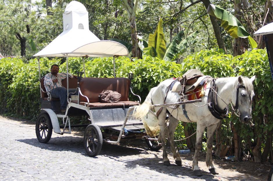 Por higiene, los carruajes deben cargar un depósito para que el caballo no deje sus necesidades sobre la calle. (Foto: Manuela Trillos/Soy502)
