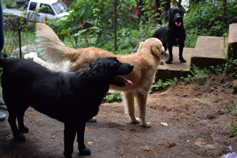 Los perros necesitan alimento para poder continuar con su labor. (Foto: Nathaly Arbizú/Soy502)