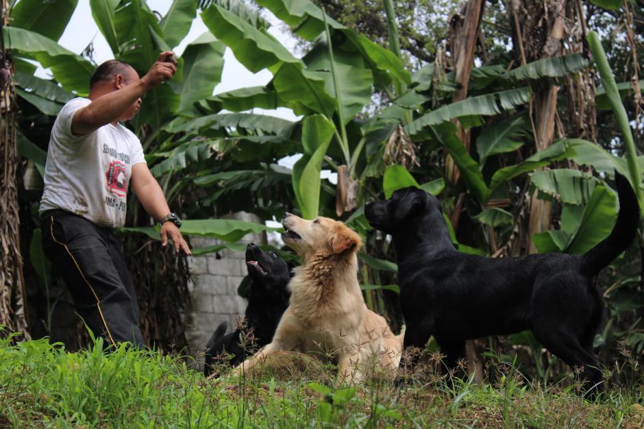 Los perros son entrenados durante 35 días. (Foto: Andrea Castillo/Soy502)