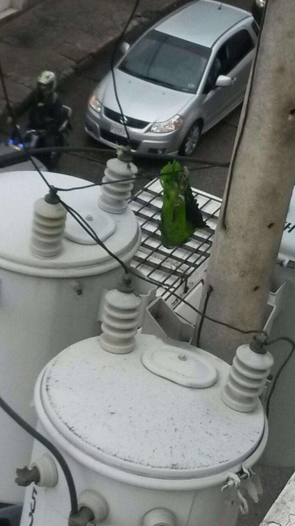 En el sector afectado no funcionan los semáforos. (Foto: Soy502)