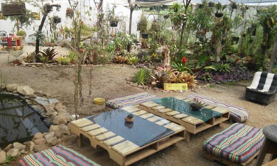 Antigua Exotic Garden es un pequeño vivero de especies exóticas. (Foto: Antigua Exotic Garden)
