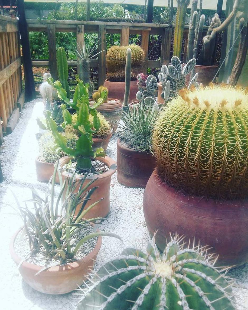 Especies de lejanos lugares del mundo conviven aquí. (Foto: Antigua Exotic Garden)