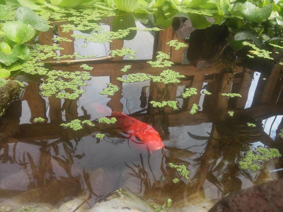 En el lugar puedes relajarte y tomar bebidas frescas, además de disfrutar el paisaje. (Foto: Antigua Exotic Garden)