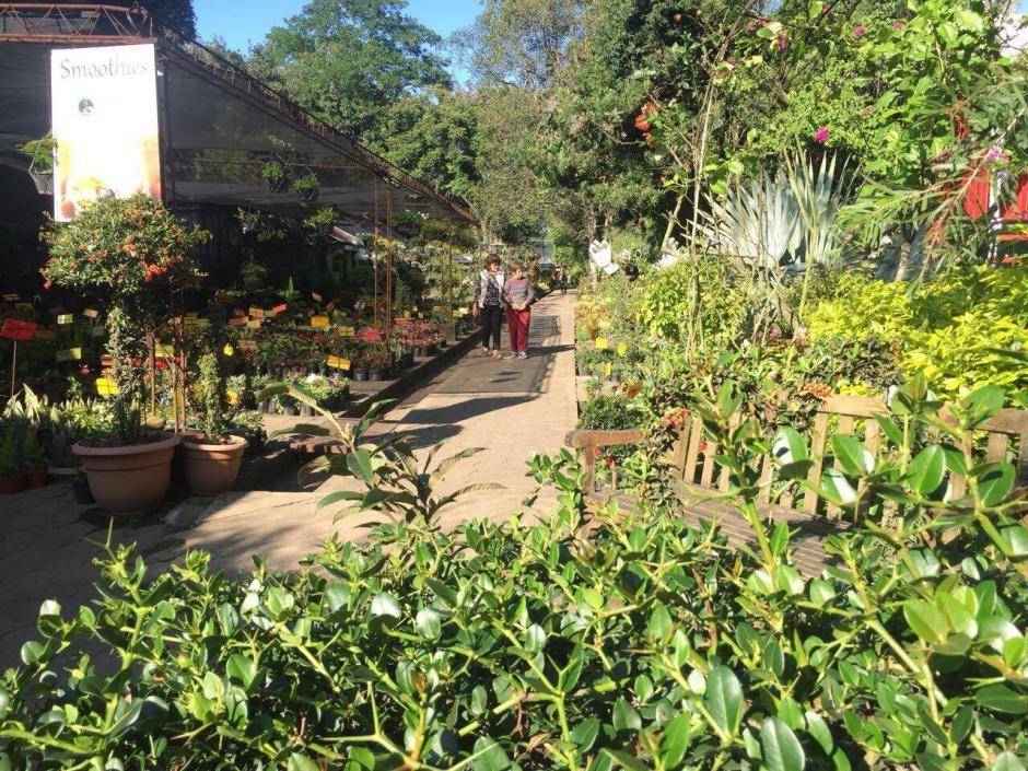 Botanik, en zona 11, ofrece un amplio lugar para conocer distintas especies de plantas. (Foto: Vivero Botanik)