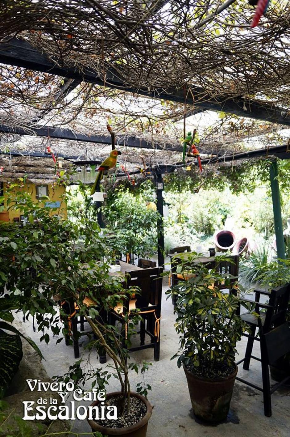También puedes probar deliciosos platillos mientras disfrutas del lugar. (Foto: Vivero y Café Las Escalonia)