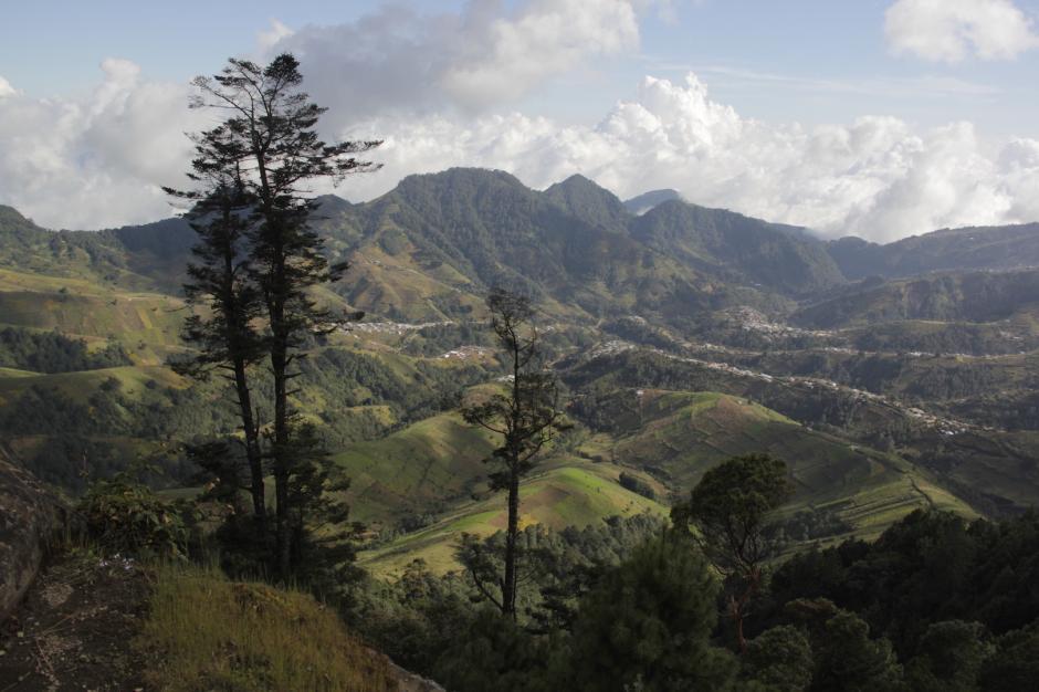 El bosque de Cantel contaba con más de 500 mil hectáreas de pinabete, en la actualidad solo tiene 25 mil. (Foto: Fredy Hernández/Soy502)