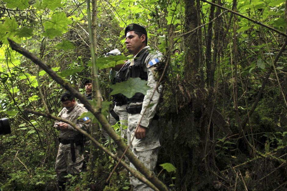 Los agentes harán operativos para evitar la tala de esta especie. (Foto: Fredy Hernández/Soy502)