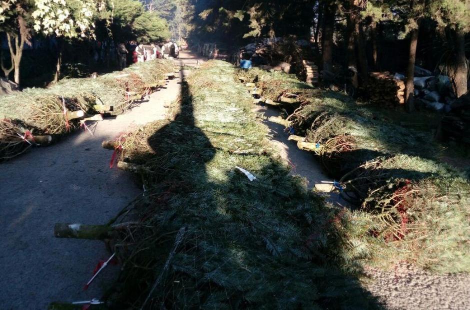 En el camión fueron encontrados 67 árboles, según informaron las autoridades. (Foto: PNC)
