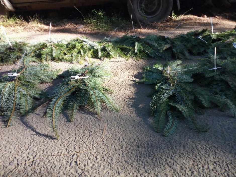 Las autoridades también decomisaron 31 coronas y 16 guirnaldas. (Foto: PNC)