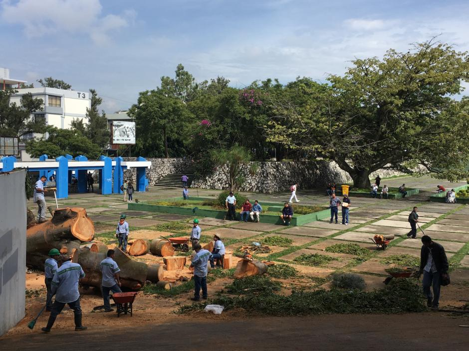 Los trabajadores de la Usac retiraron los restos del árbol. (Foto: Fredy Hernández/Soy502)