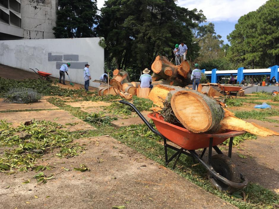 La ceiba no soportó los vientos de los últimos días. (Foto: Fredy Hernández/Soy502)