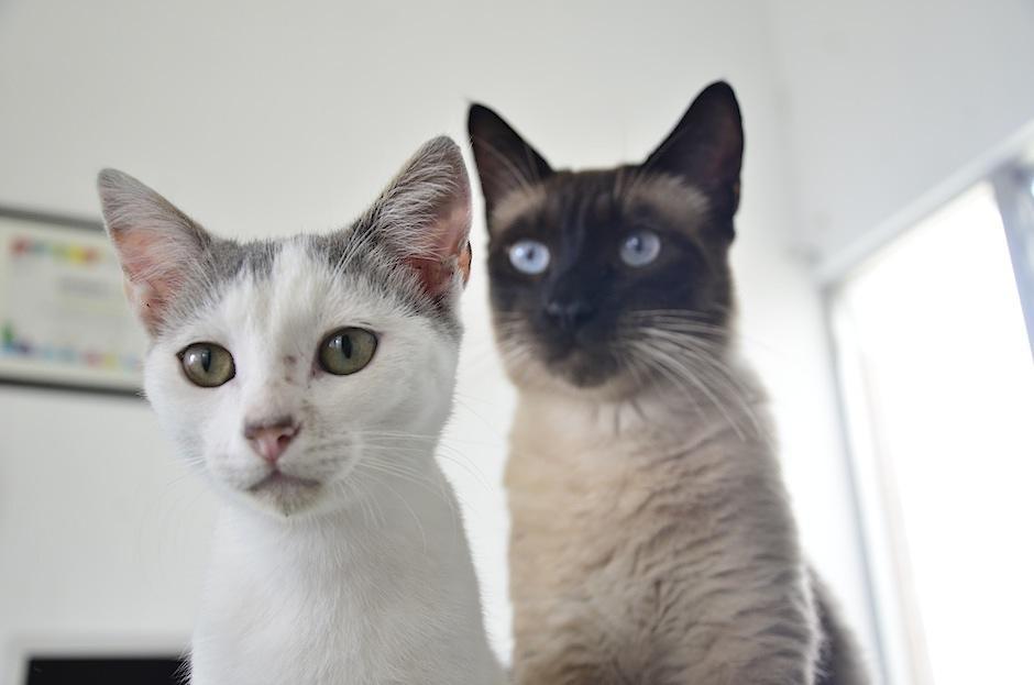 Estos datos pueden cambiar la percepción que tienes acerca de los gatos. (Foto: Selene Mejía/Soy502)
