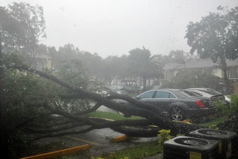 Varios árboles fueron derribados por las fuertes ráfagas de viento. (Foto: AFP)