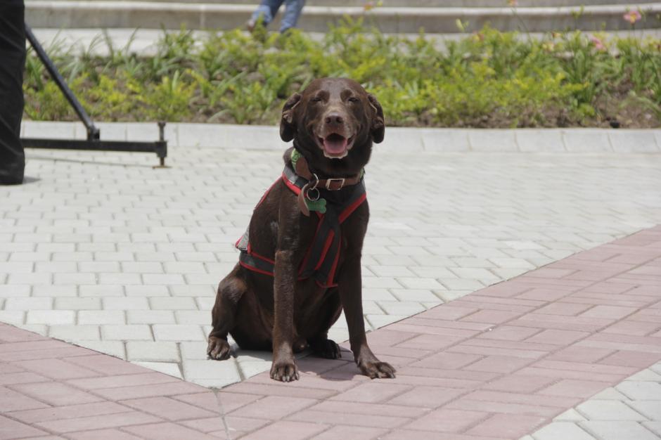 Las mascotas también podrán pasear con sus dueños por el área. (Foto: Fredy Hernández/Soy502)