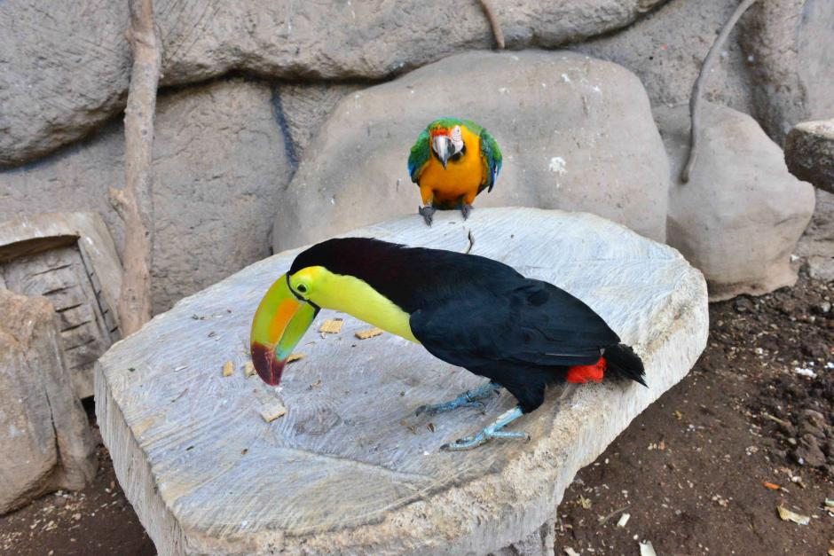 La primer parada del tour VIP es con las aves. (Foto: Jesús Alfonso/Soy502)