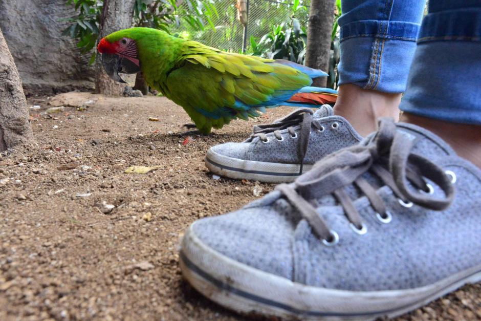 Los colores y plumas de las aves son únicos. (Foto: Jesús Alfonso/Soy502)